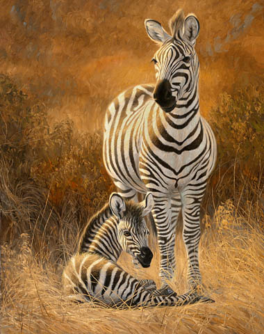Zebra baby and mother - photo#9
